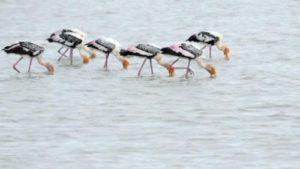 pelicans heaven in andhra pradesh